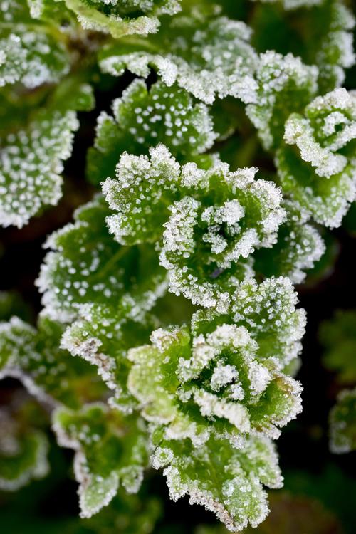 frost15_2_21_1.jpg