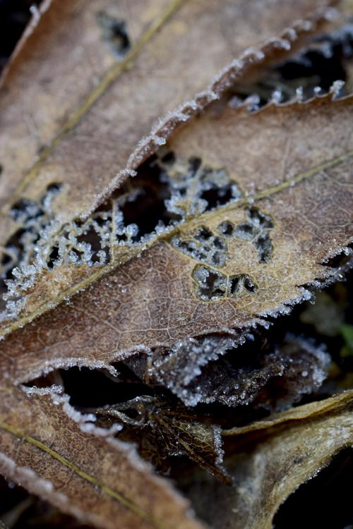 frost15_2_21_11.jpg