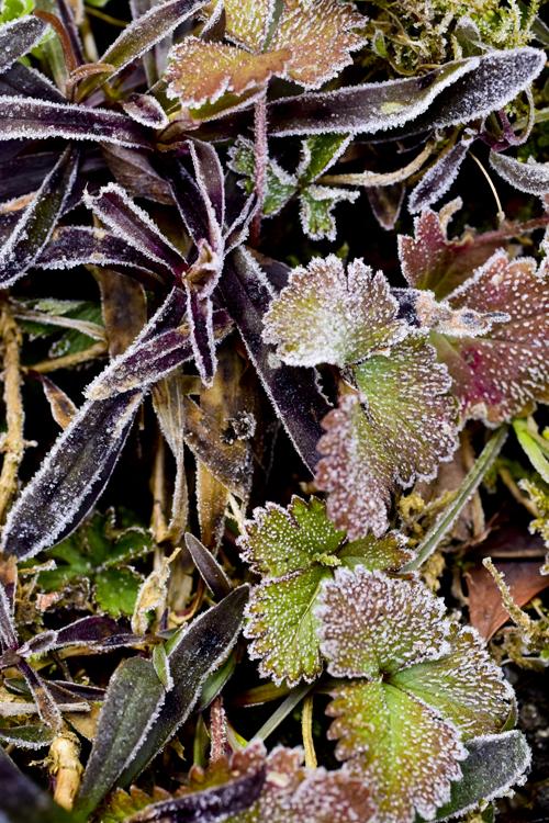 frost15_2_21_2.jpg