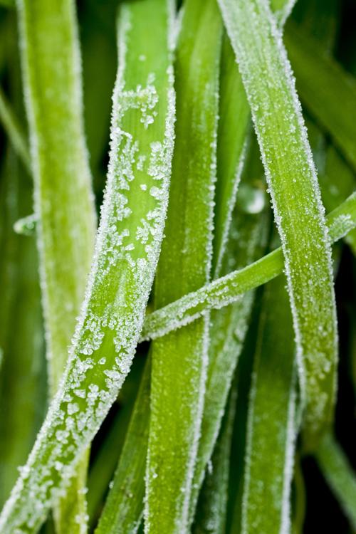 frost15_2_21_3.jpg