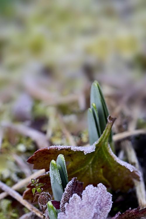 frost15_2_21_5.jpg
