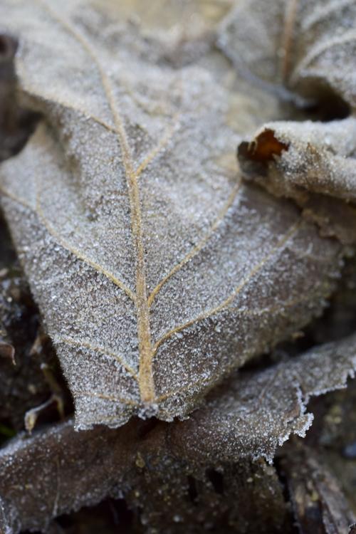 frost15_2_21_7.jpg
