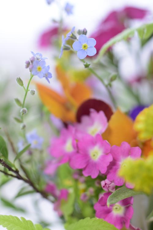 garden_flowers_15_5_9_2.jpg