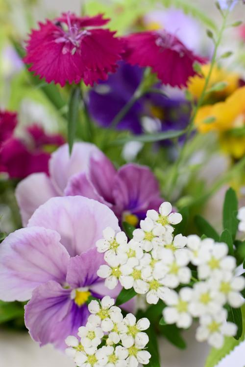 garden_flowers_15_5_9_3.jpg