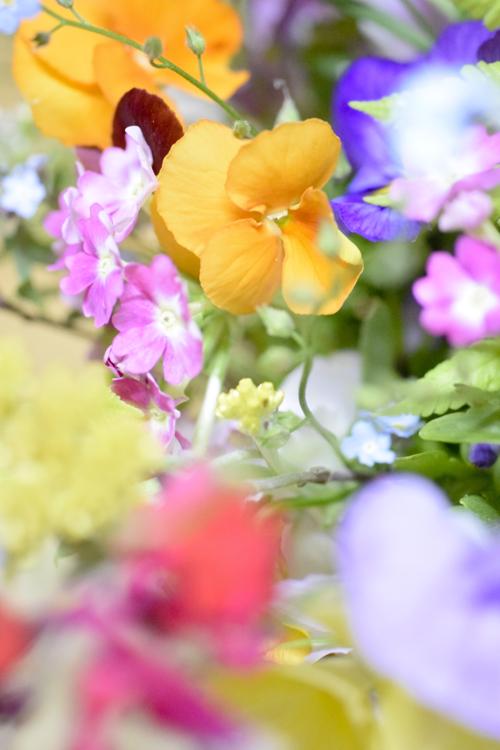 garden_flowers_15_5_9_4.jpg