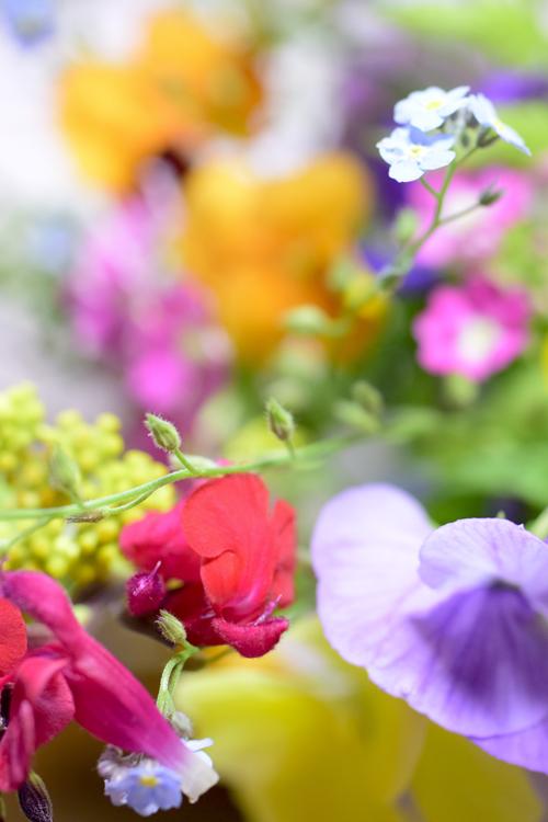 garden_flowers_15_5_9_5.jpg