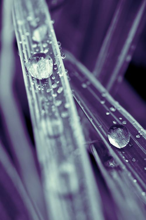 ice_drop_15_1_15_2.jpg