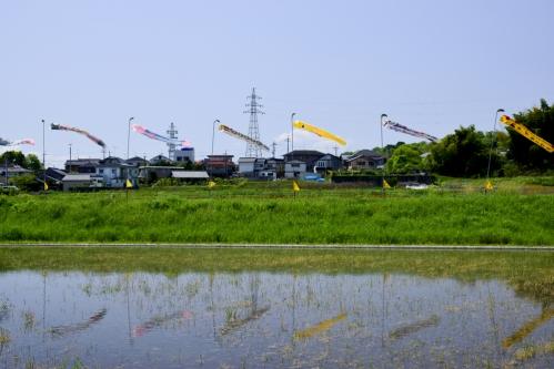 真野鯉のぼり祭り
