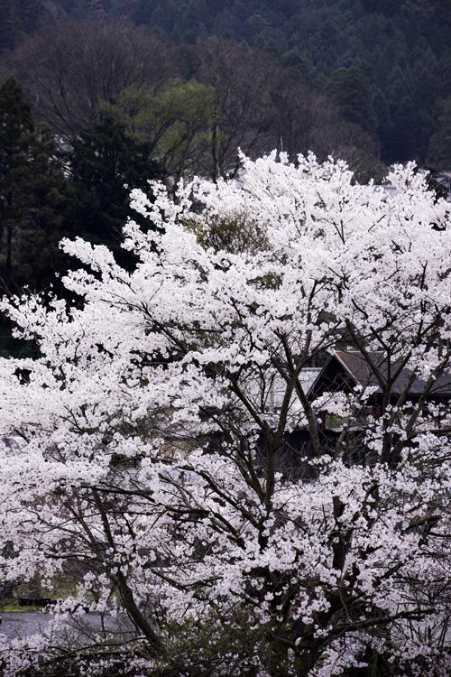 ohara_15_4_7_6.jpg