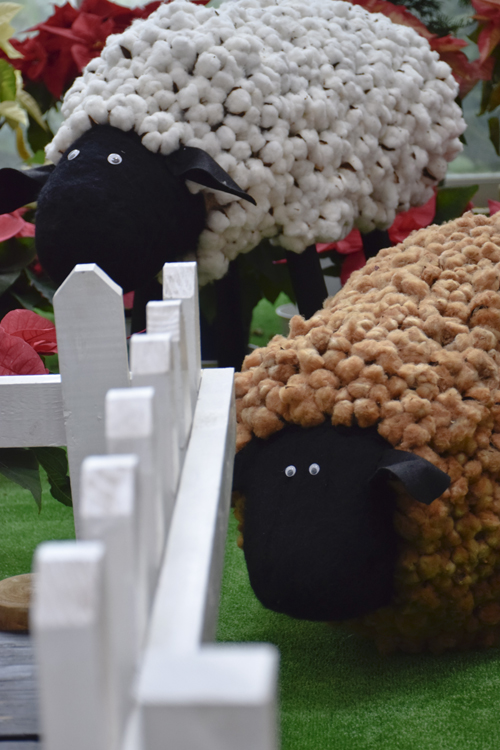 sheep_14_12_25_2.jpg