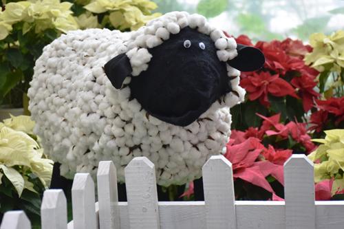 sheep_14_12_25_3.jpg