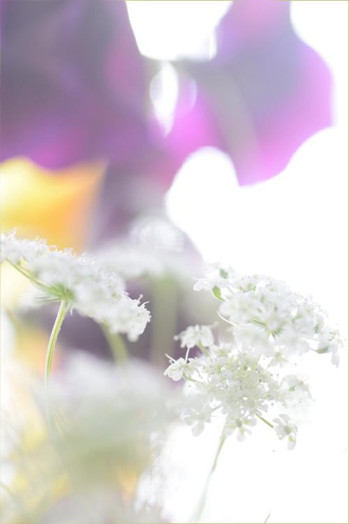 sweet_pea_15_12.jpg