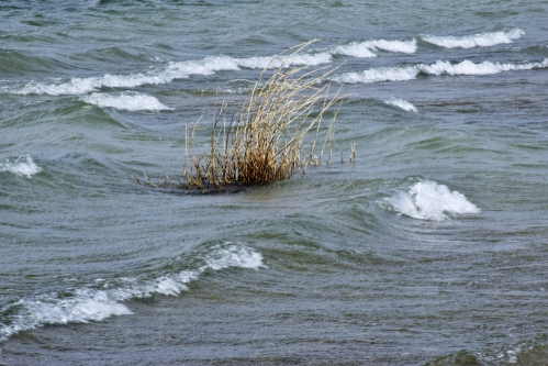 wind_dry_grass_wave_1.jpg