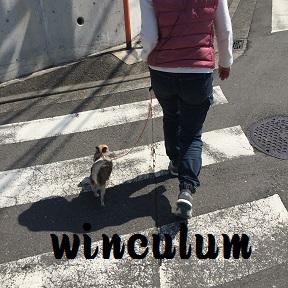 yuzu150406.jpg