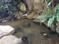 ビャガーデン博多屋:亀