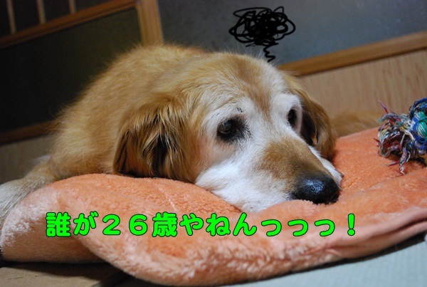 2015 01 05 (5)