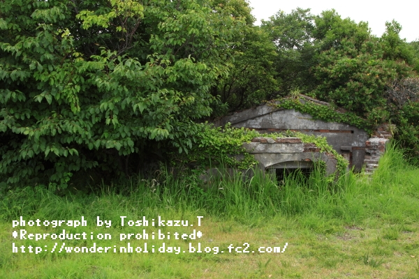 IMG_8841d.jpg