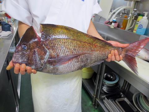 004陸奥湾の鯛