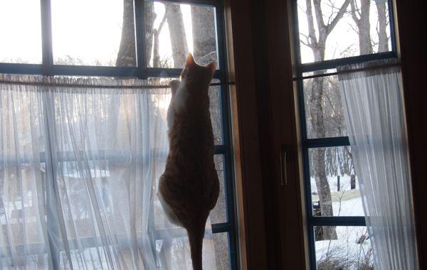 なっちゃん窓1
