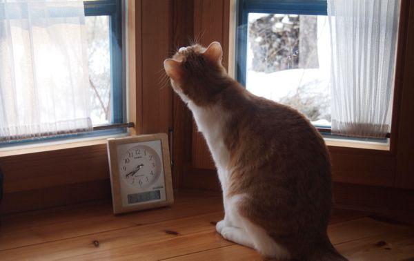 なっちゃん窓3