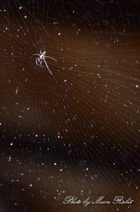 蜘蛛の糸 愛媛県西条市八千代巷