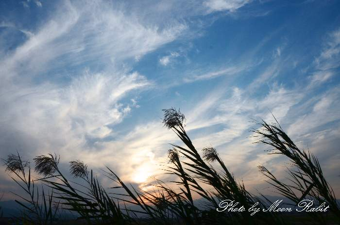 葦 愛媛県西条市禎瑞 10月の植物