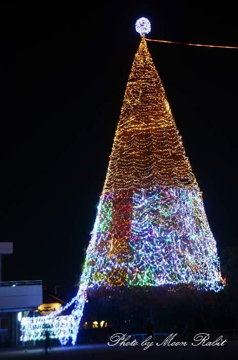 金栄小学校 イルミネーション ドリームツリー 愛媛県新居浜市