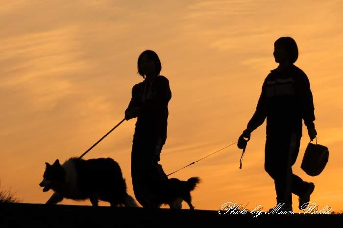 犬の散歩 愛媛県西条市古川 加茂川堤防