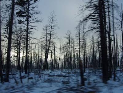 20150108ブライスキャニオンの森