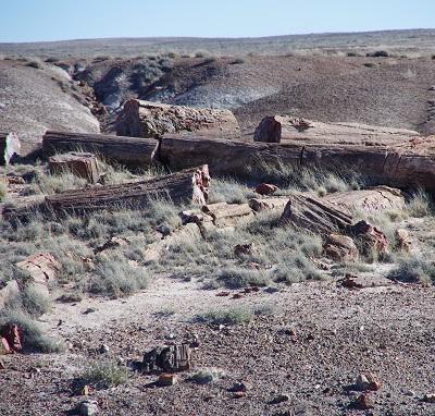 20150206化石1