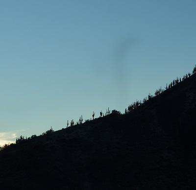 20140214稜線のサボテン