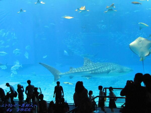 8384美ら海水族館150428