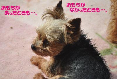 DSC_2166_201506101911286ed.jpg