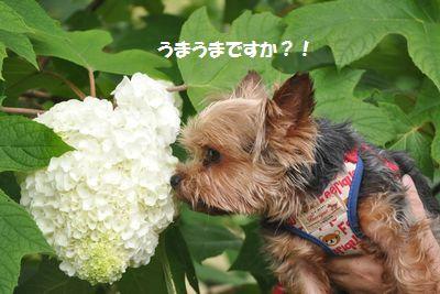 DSC_2551.jpg