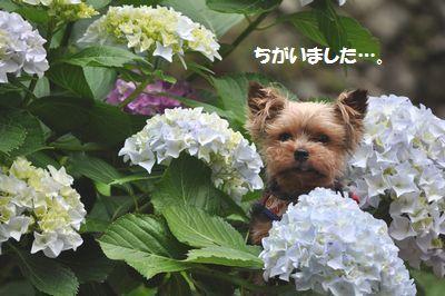 DSC_2560.jpg