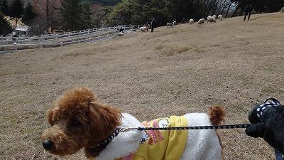 六甲山牧場にて