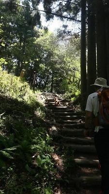 この階段登ったら・・・