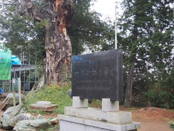 観音寺16