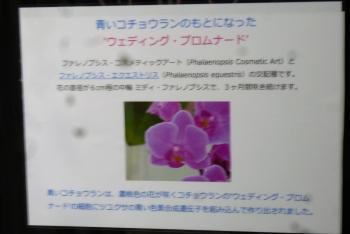 手柄山温室植物園 青いコチョウラン