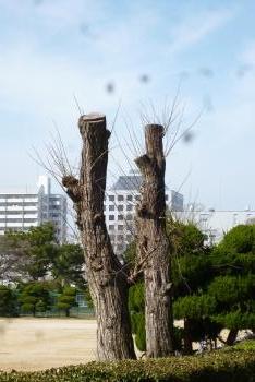 お城 (動物園)
