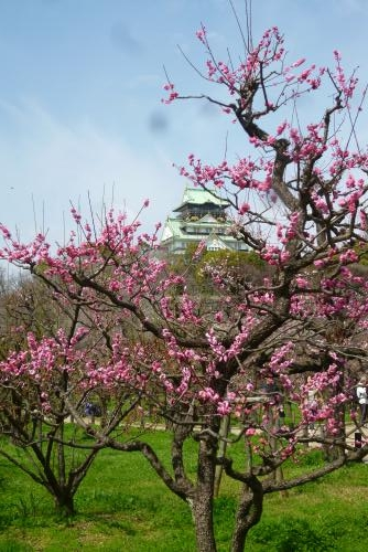 大阪城 と 梅