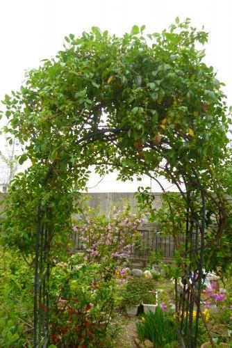 みっちゃんの庭