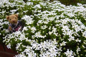 緑花センターさん(ベァーとお花)