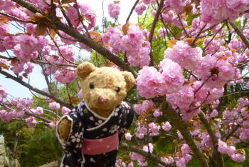 ベァーと桜 姫路城