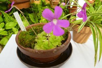 緑花センター