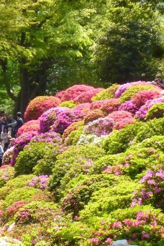 東京一人旅  根津神社