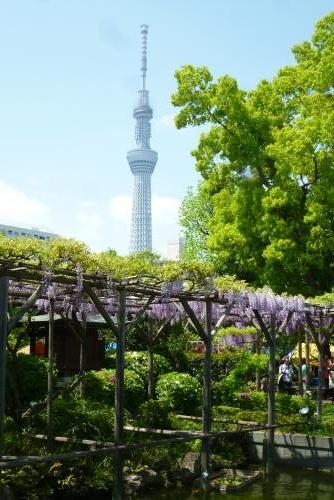 東京一人旅  亀戸天神
