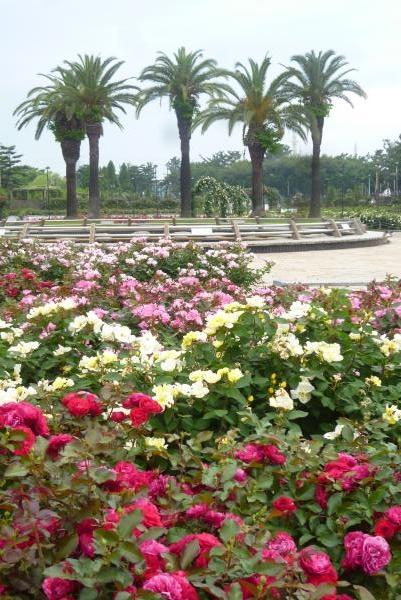 浜寺公園 ばら園