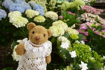 紫陽花とベァー