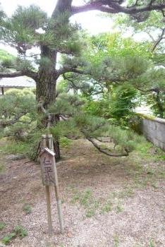 仁平寺さん (紫陽花)